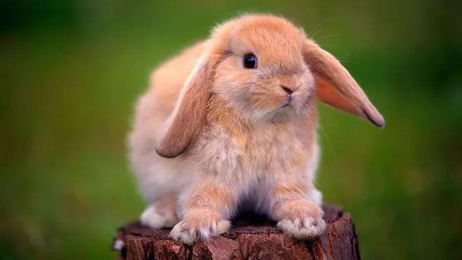 怎么和相亲对象聊天 属兔的聊天技巧方式