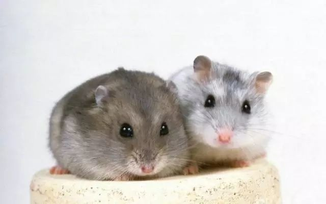 怎么和相亲对象聊天 属鼠的聊天技巧方式