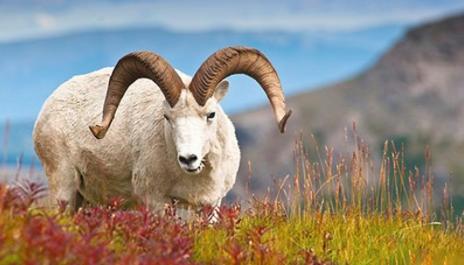 属羊人:怎么和相亲对象聊天 属羊的聊天技巧方式